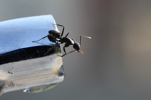 ant-1409911_640.jpg