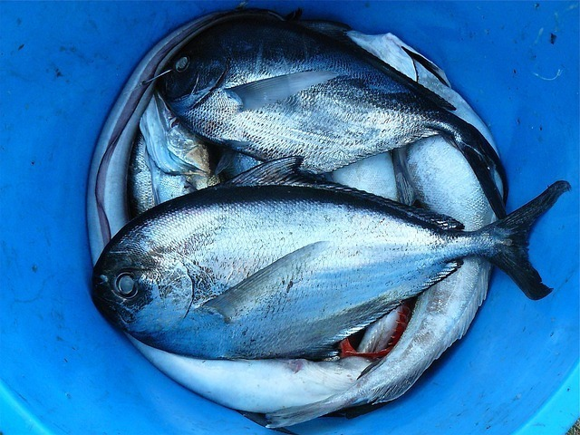 fish-422543_640.jpg